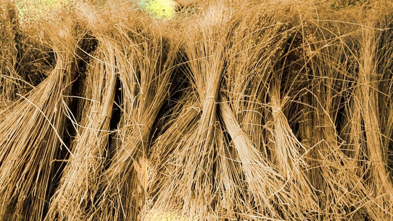 how to grow flax for linen
